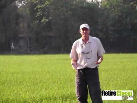 YT-beautiful-rice-fields